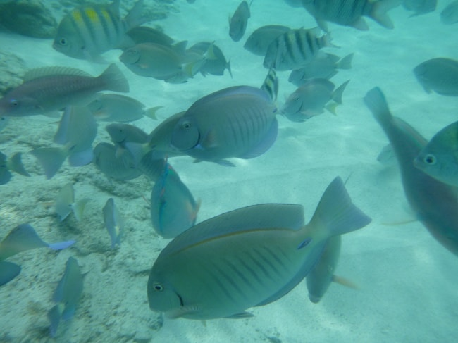 fish in Coki beach snorkeling
