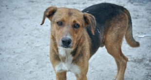 Stray Dogs and Cats in Puerto Rico