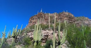 Sabino Canyon Tucson Arizona Is Worth Exploring